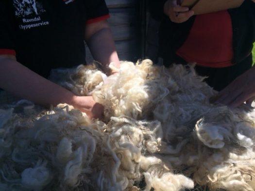 Hands in a white fleece. The sun is shining.