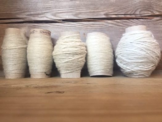 Five toilet rolls filled with white yarn.