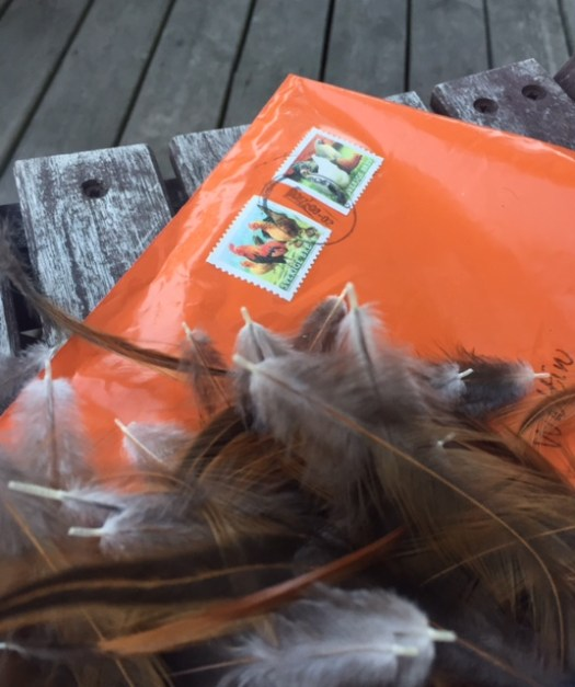Chicken feathers on an orange envelope with chicken stamps.