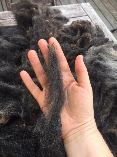 Close-up of a dark grey Shetland fleece