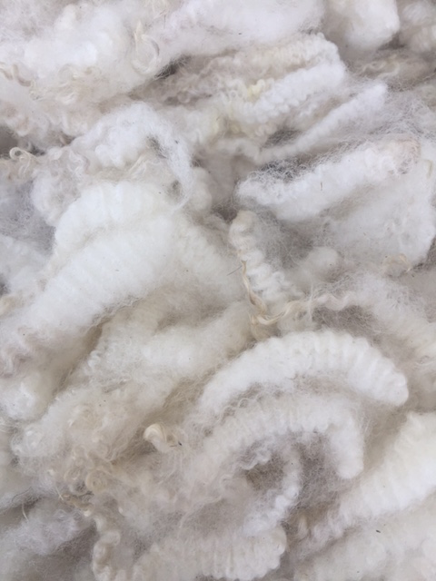 Close-up of crimpy wool.