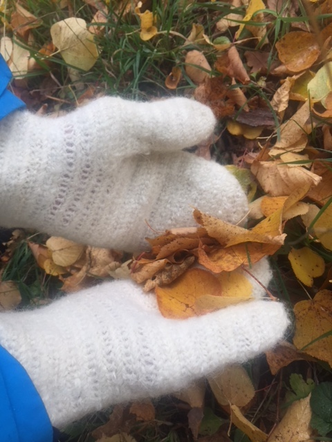 A pair of hands in white nalbinding mittens, holding autumn leaves