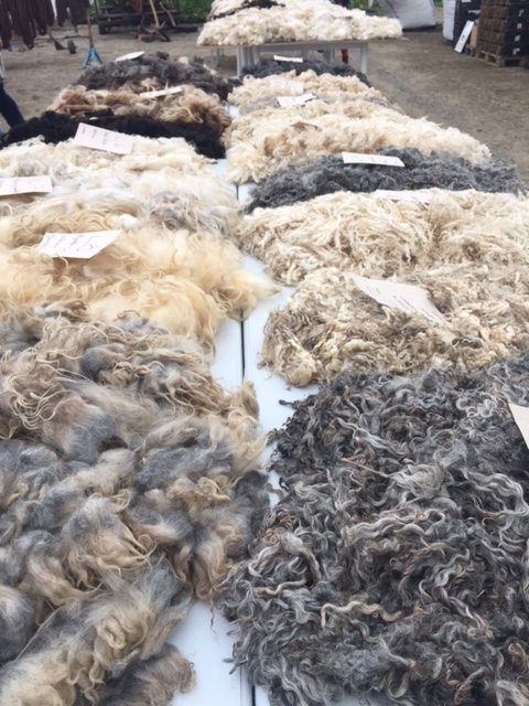 Lots of fleeces of different breeds and colours on a big table