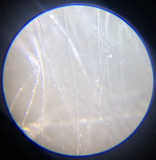 white wool seen through a microscope
