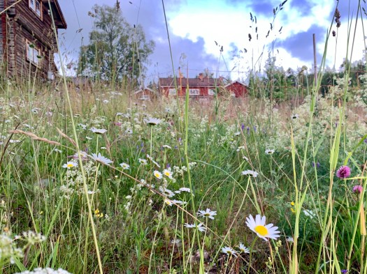 A meadow of flowers with a red building in the background.
