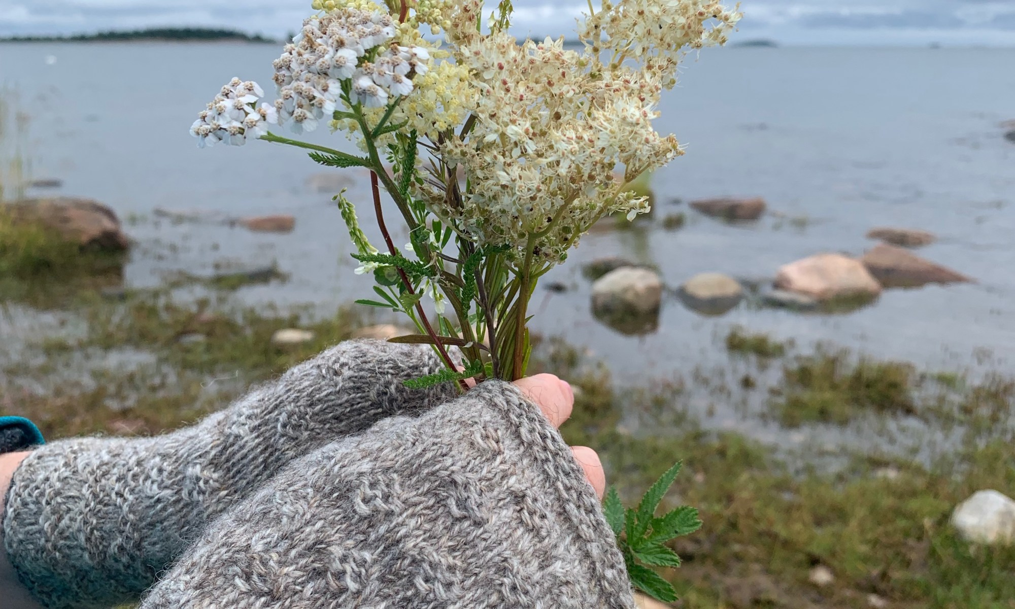 Two hands wearing mittens, and holding some wild flowers by the sea.