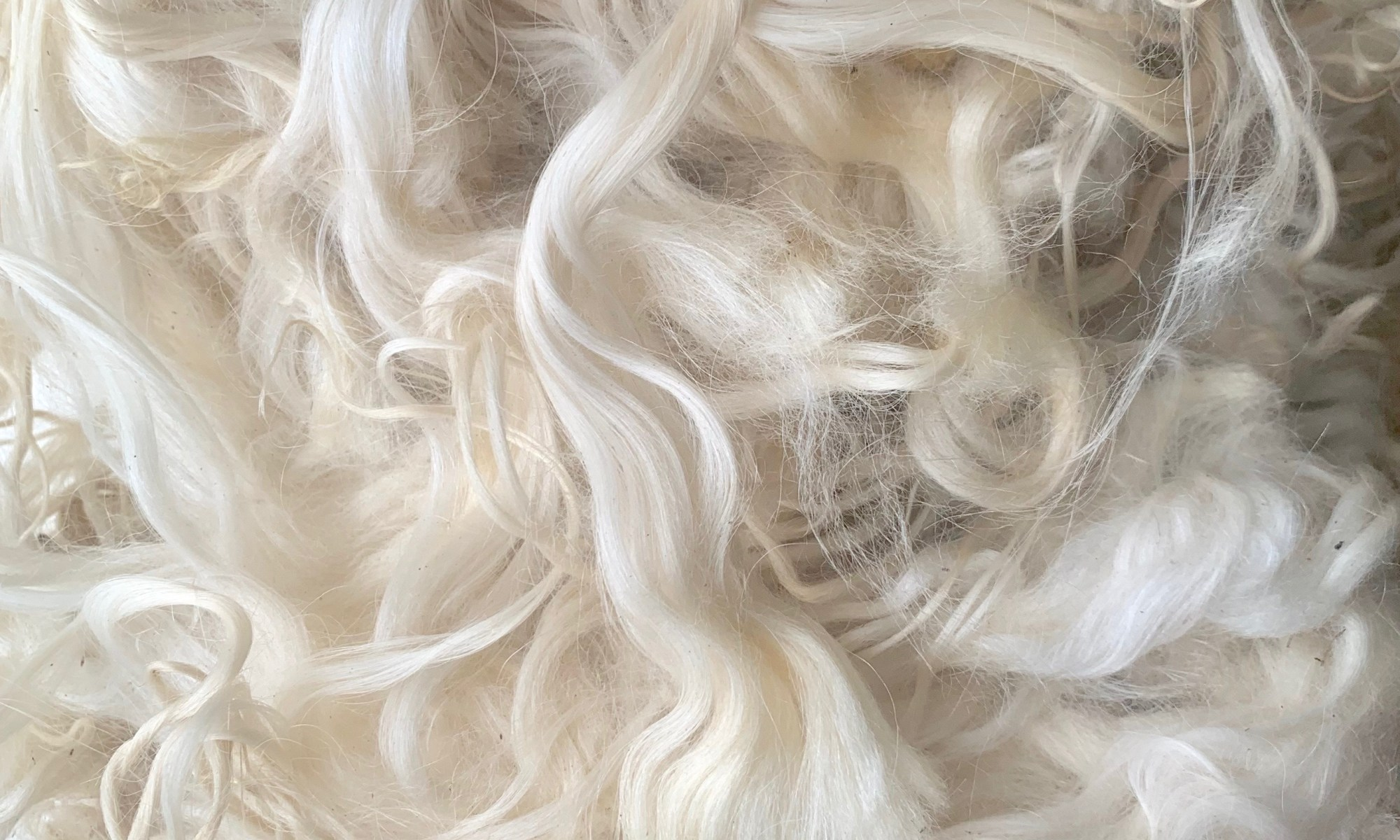 A fleece with long and shiny locks with almost no crimp