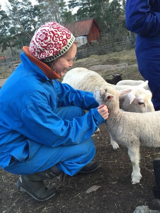 Finull lambs.