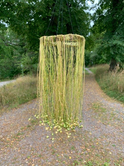 I made a grass crown of the medium length flax plants.