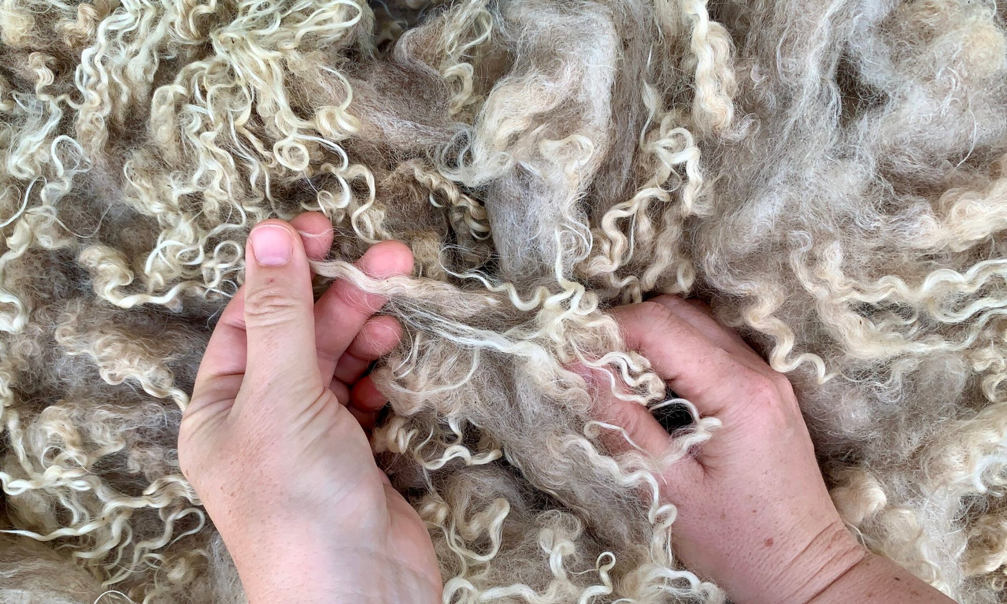 Listen to the wool. It has a lot to teach us.