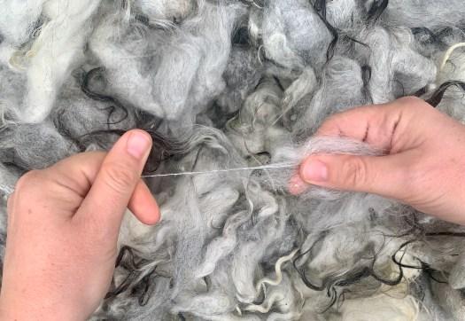 Elin the Gestrike fleece is full of potential.