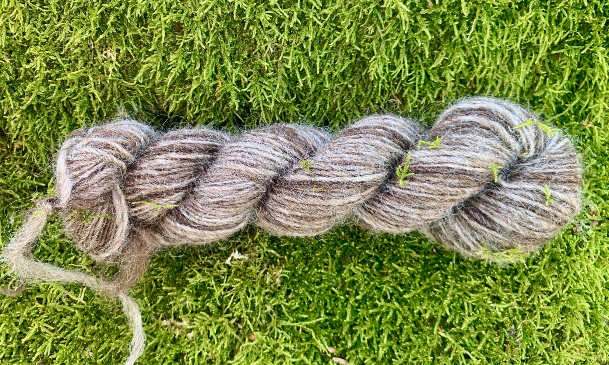 Sport weight single yarn of four shades of brown from Pax's fleece. Spun from hand carded rolags on a floor supported Navajo style spindle. 100 meters, 44 grams. 2270 m/kg. Can I keep this for cuddling?