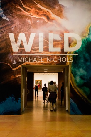 WILD: Michael Nichols' Exhibit at the Philadelphia Museum of Art