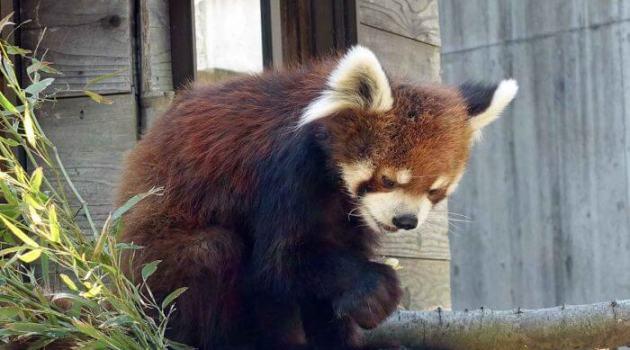【千葉市動物公園】風太くんに会いに男一人で動物園に行ってきた!