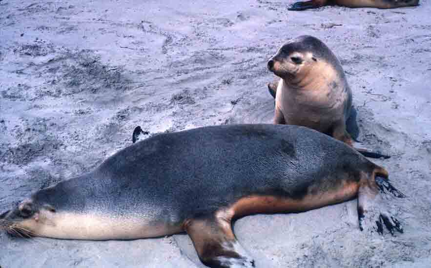 Sealion mom and pup.