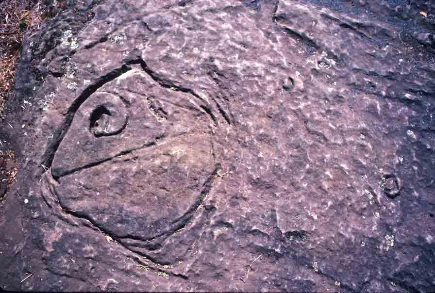 Tasmanian Aboriginal rock engraving