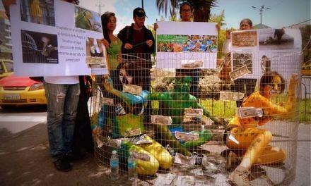 Acción contra el tráfico de animales
