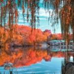 Central Park New York Autumn Scaled, WAM Partners