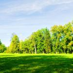 Summer Landscape Sunny Weather Forest Trees Growing Park Nature Day 147714998, WAM Partners