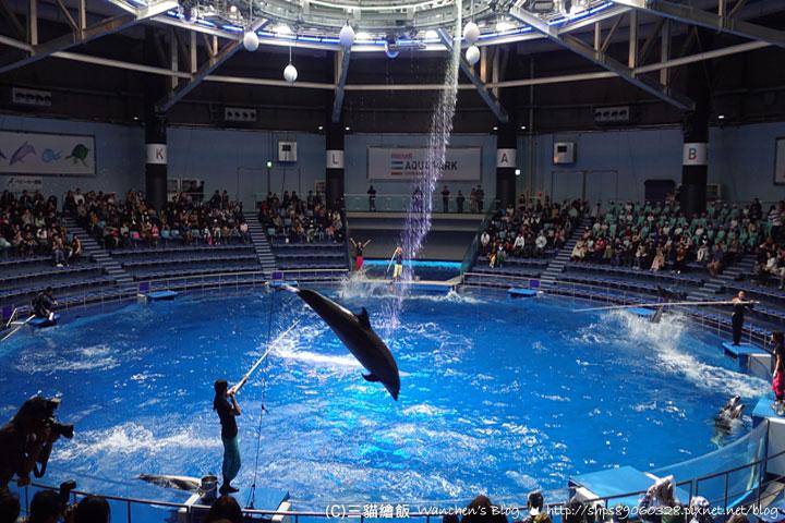 品川水族館海豚表演