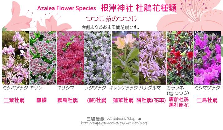 杜鵑花種類