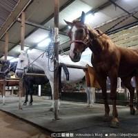 淡水騎馬 綠野馬場 馬術入門初體驗(含課程心得及費用)