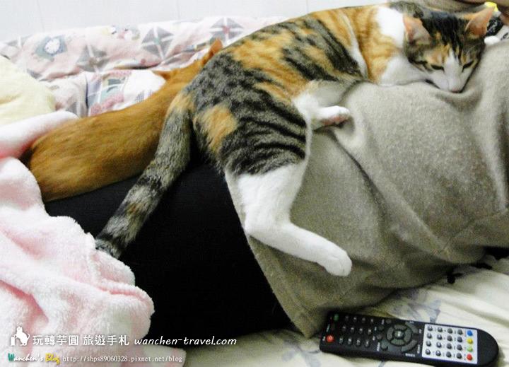 cat-(14)