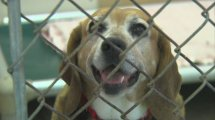 Shelters Describe Animal Abuse Aftermath