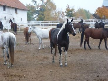 Kierzbuń horse farm.