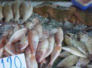 Fresh fish Kamala market, Phuket.