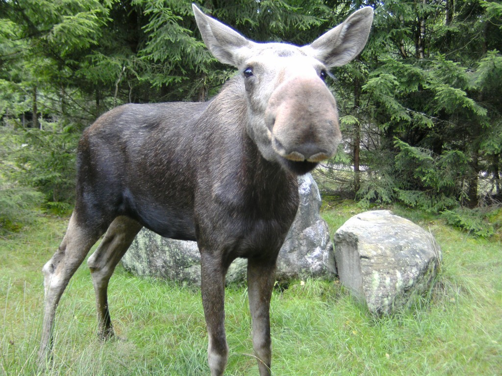 Elandenpark Smäland