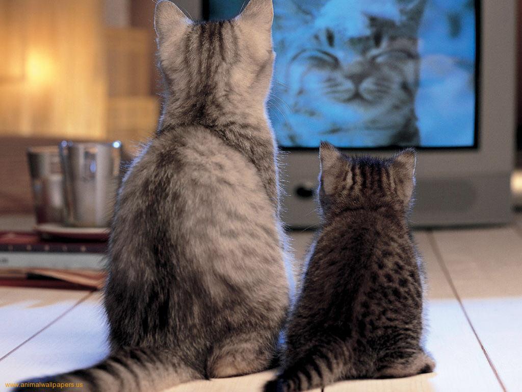 kinderen-en-tv-kijken