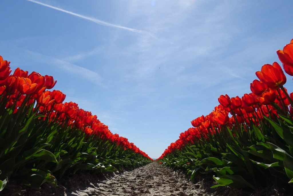 Tulpenvelden Groningen best of nine Instagram