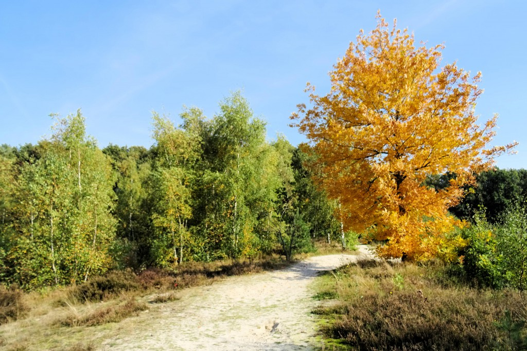 De Heemtuin Muntendam herfst