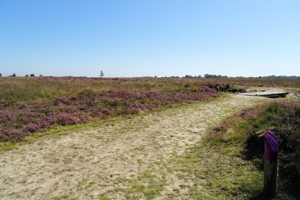 Paarse route Balloerveld