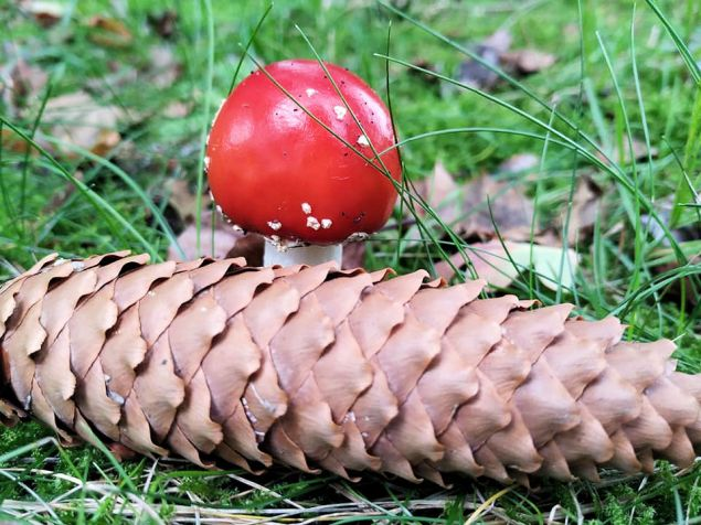 paddenstoelen herfst