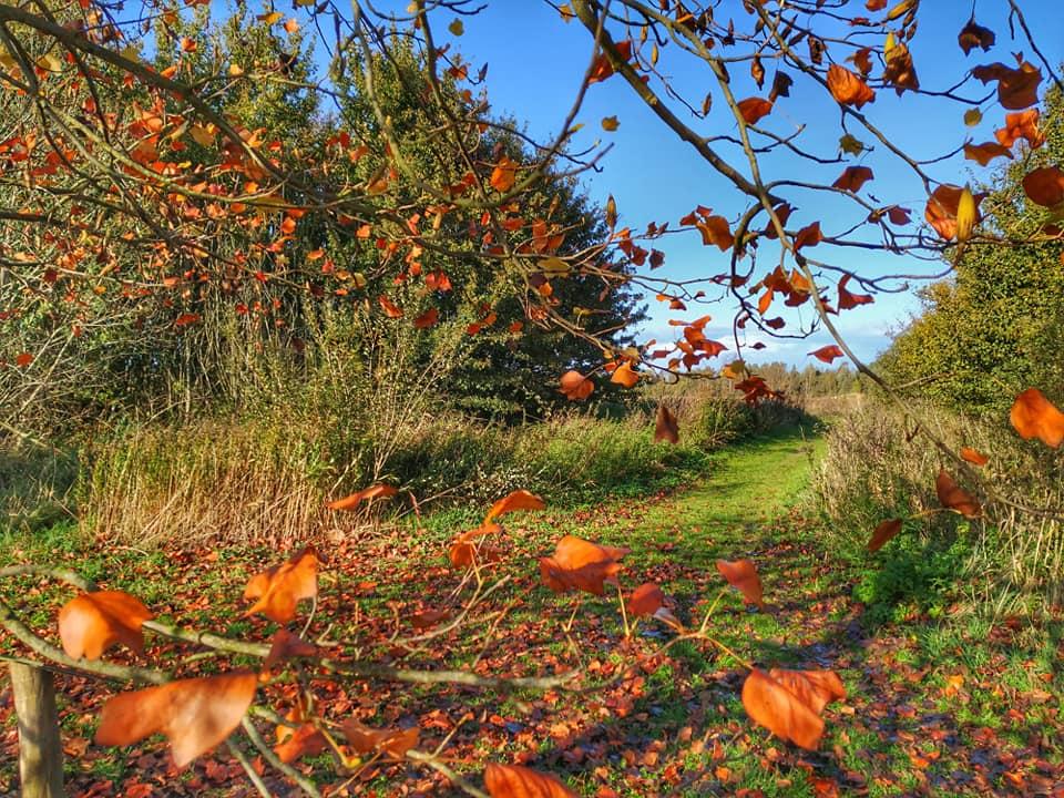 De Heemtuin herfst