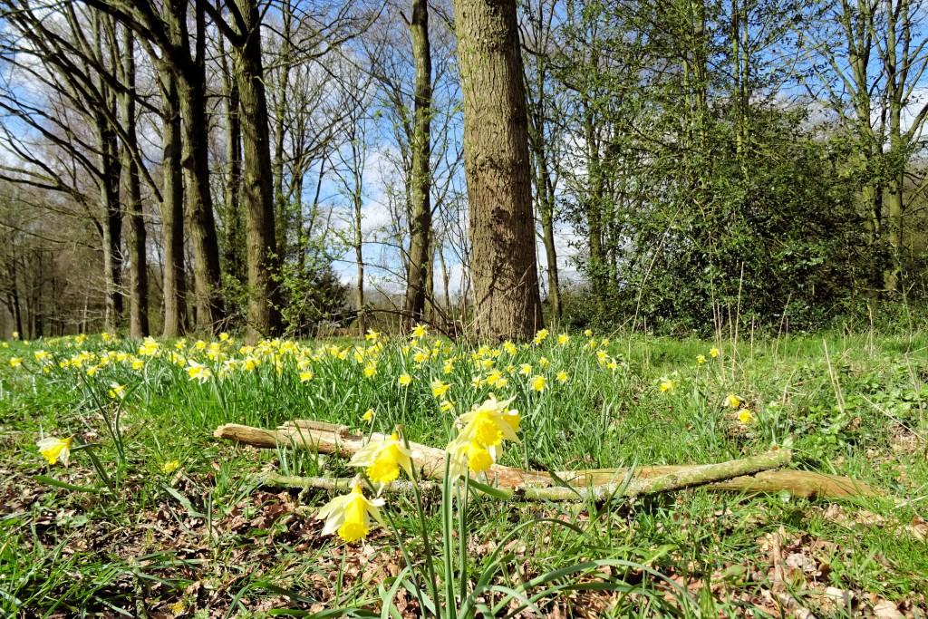 voorjaar Borgerswold Veendam
