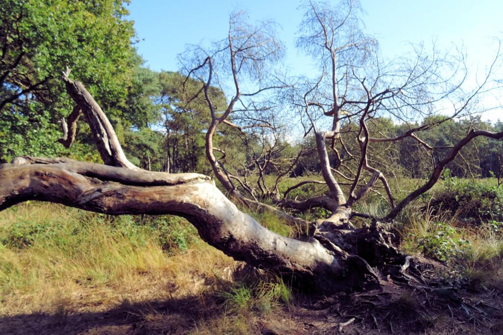 Natuurgebied Appelbergen Glimmen
