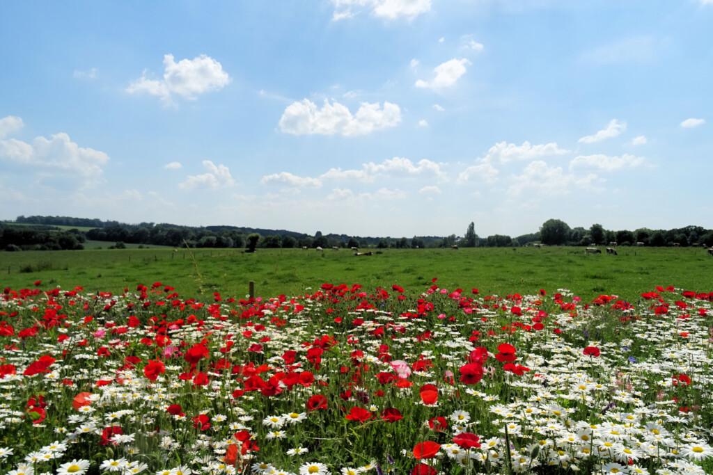 Mergellandroute Zuid-Limburg
