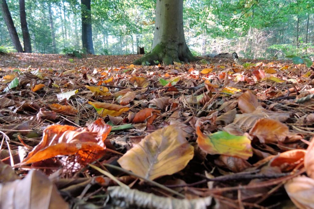 herfst Noordlaarderbos