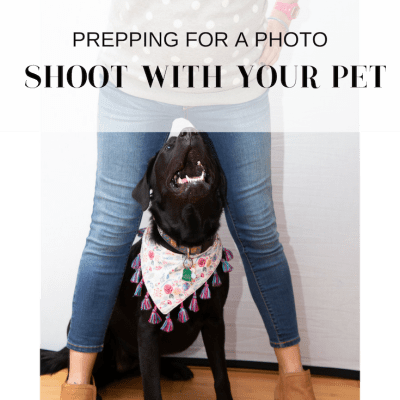 How to prep for a photo shoot with your pet.