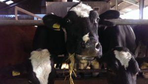 Melkveehouderij de Vries