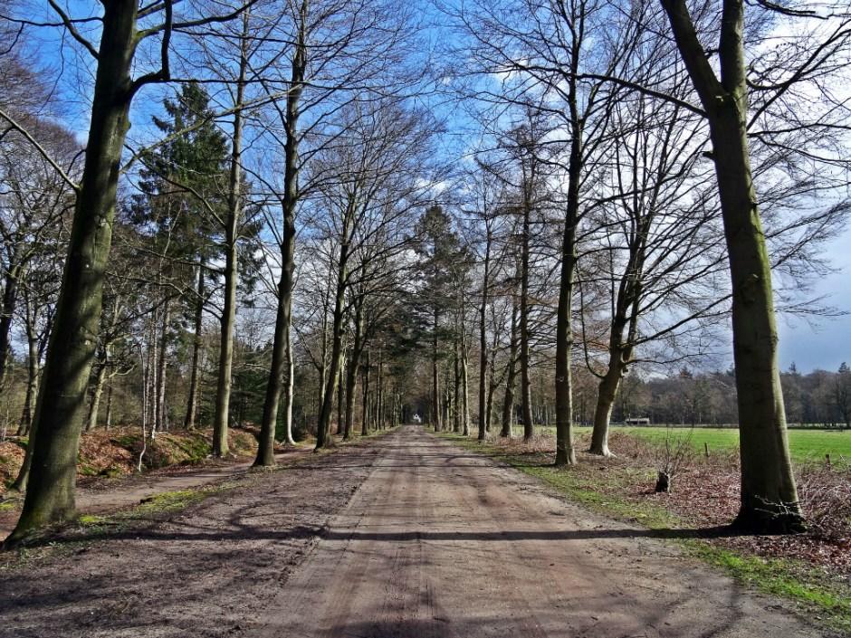 Scharrelen Heuvelrug - Laan