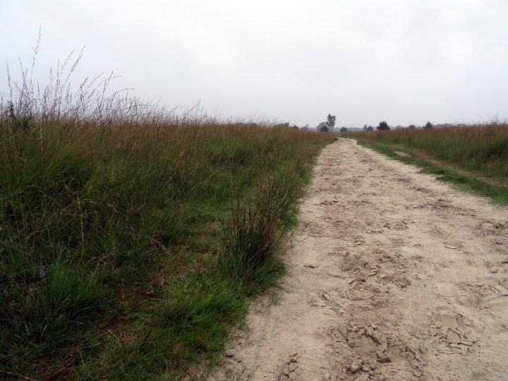 NS Wandeling Kampina - Zandweg