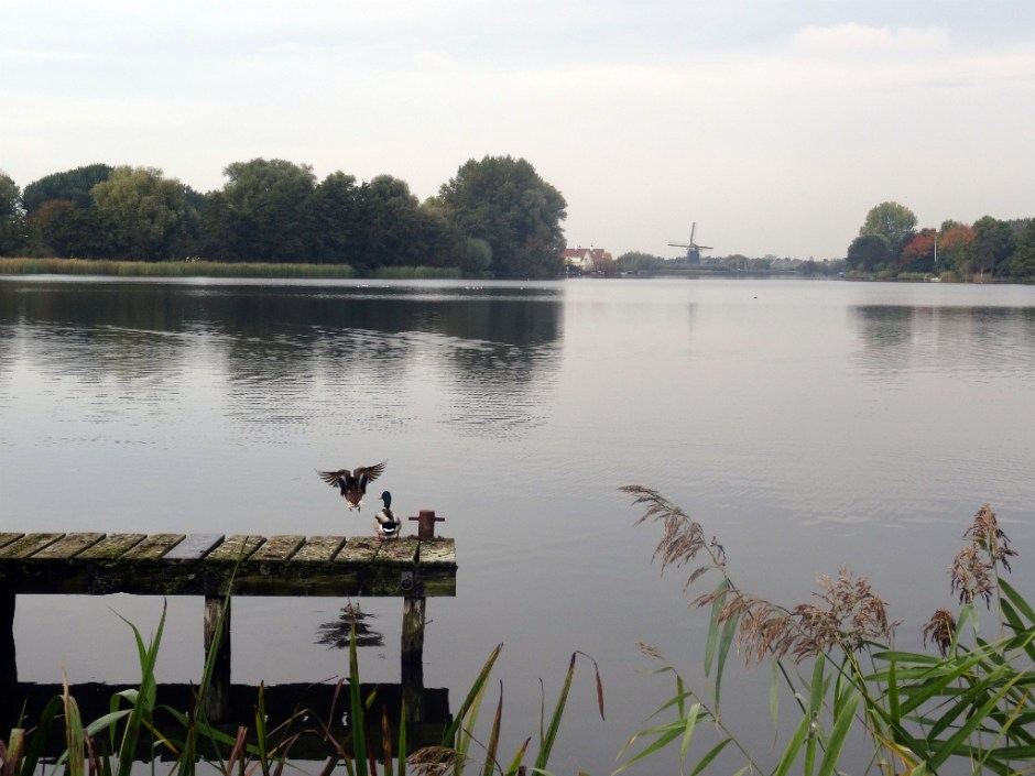 Mooiste wandeling Zuid-Holland - Maasdam