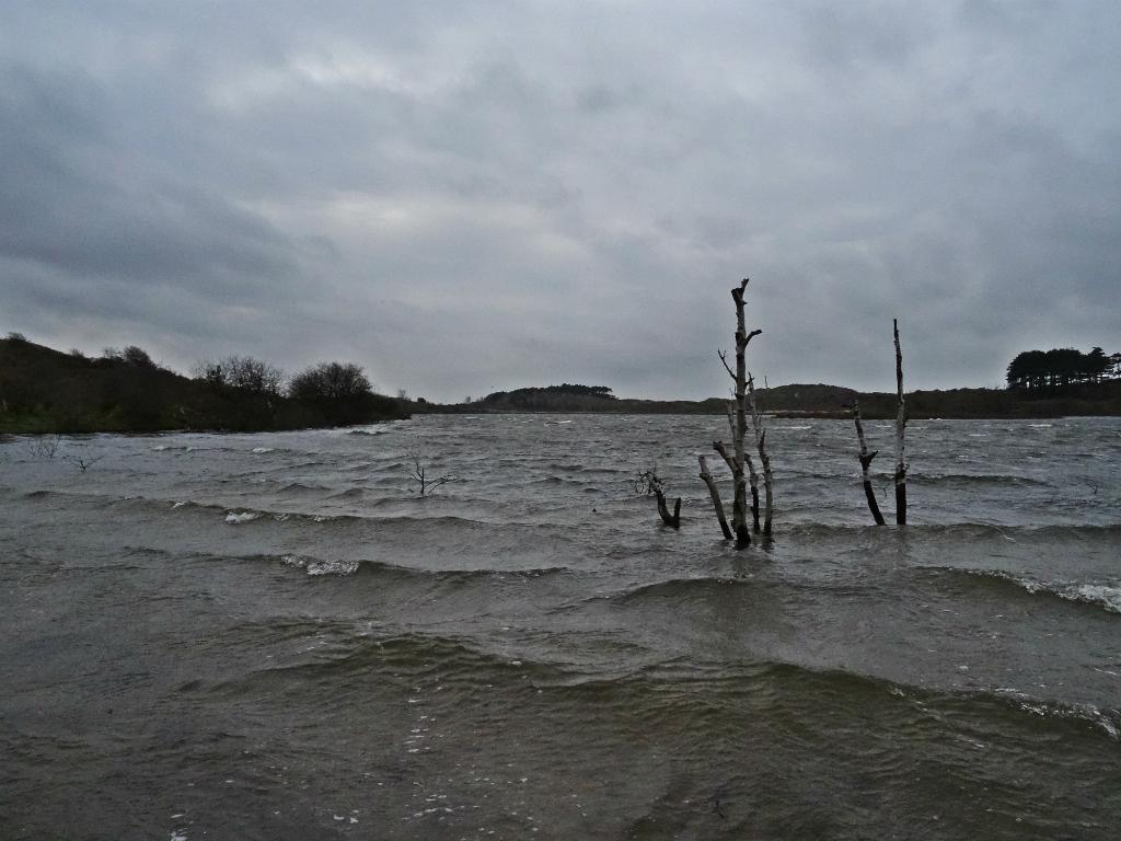 Golven op Vogelmeer - Kroegloper NP Zuid-Kennemerland