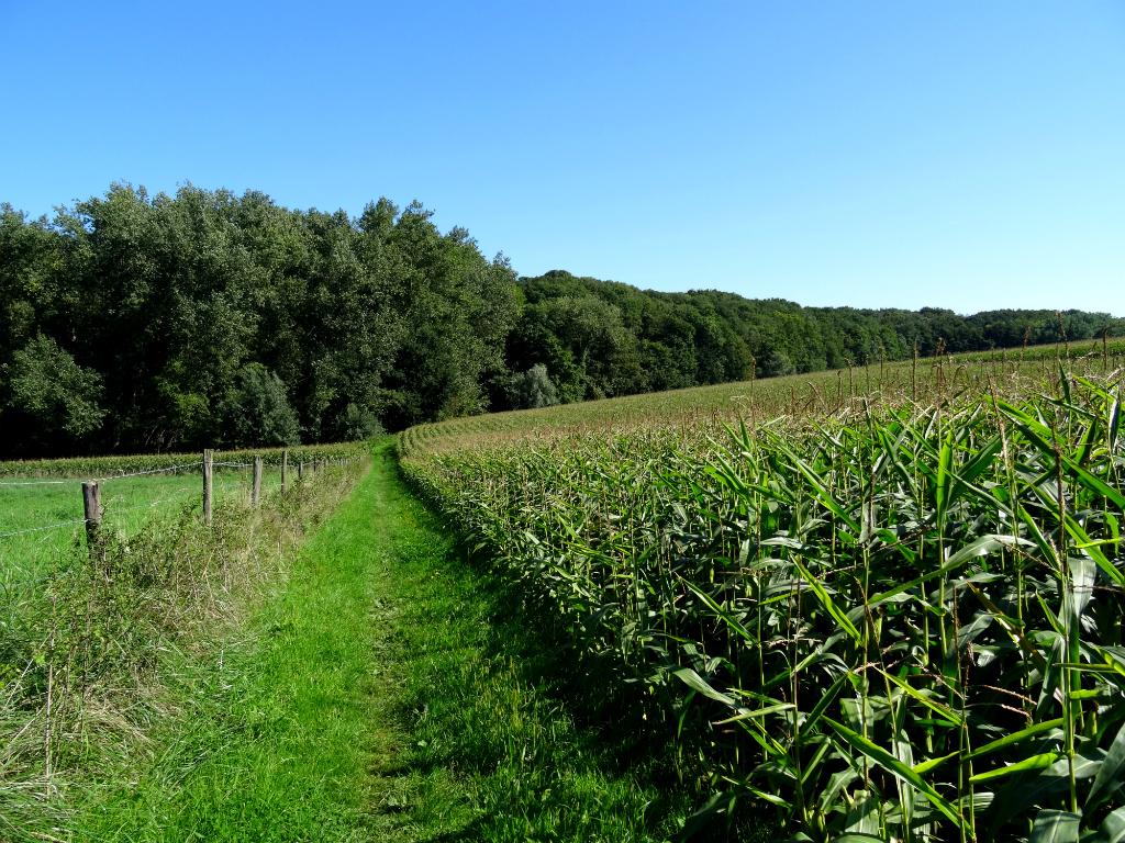 Graspad - Wolfskopwandelroute Zuid Limburg