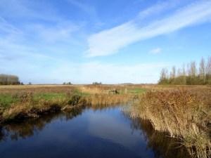 lauwersmeer vogelroute