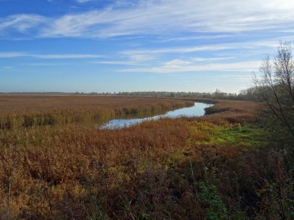 uitloper lauwersmeer vogelroute